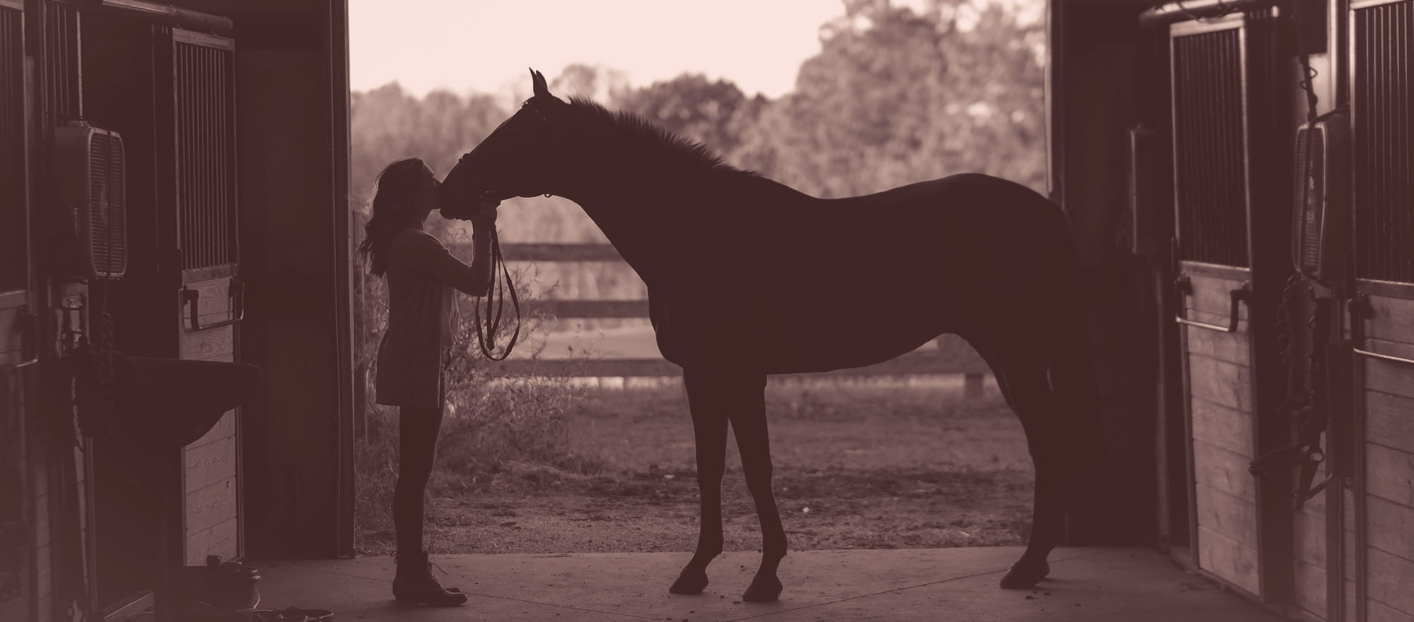 Equestrians: Schooling – how can we stay motivated?
